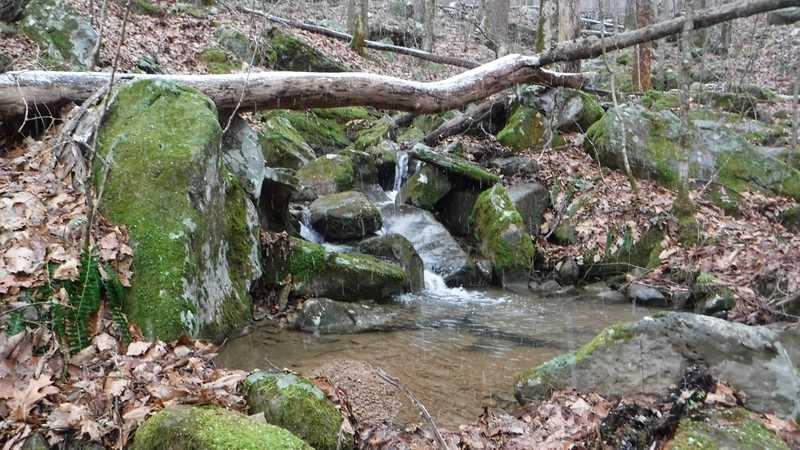 Rocky Fork Branch