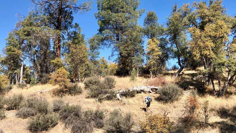 Bluejay hikes toward Hat Creek Rim