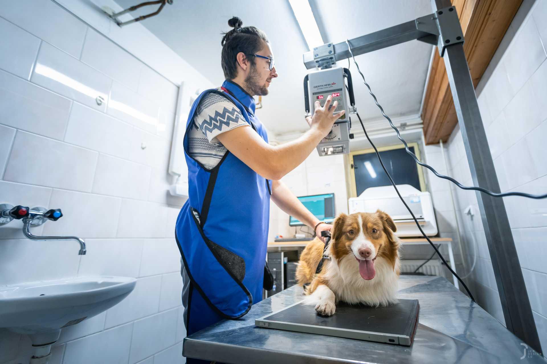 Pes na rentgenovém stole