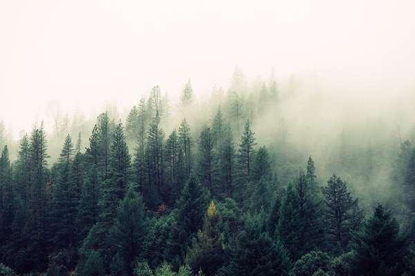 Nature - Jay Mantri