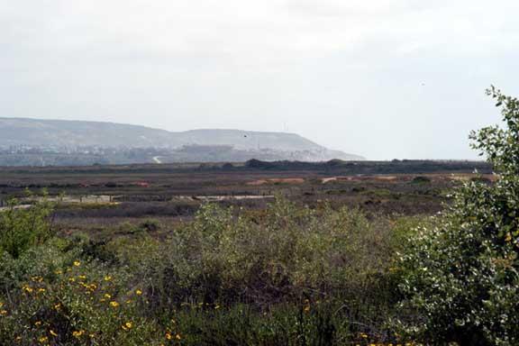Tijuana Estuary View South