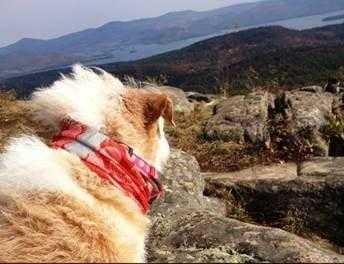 Dog-Friendly Hiking Trails - Lake George, NY