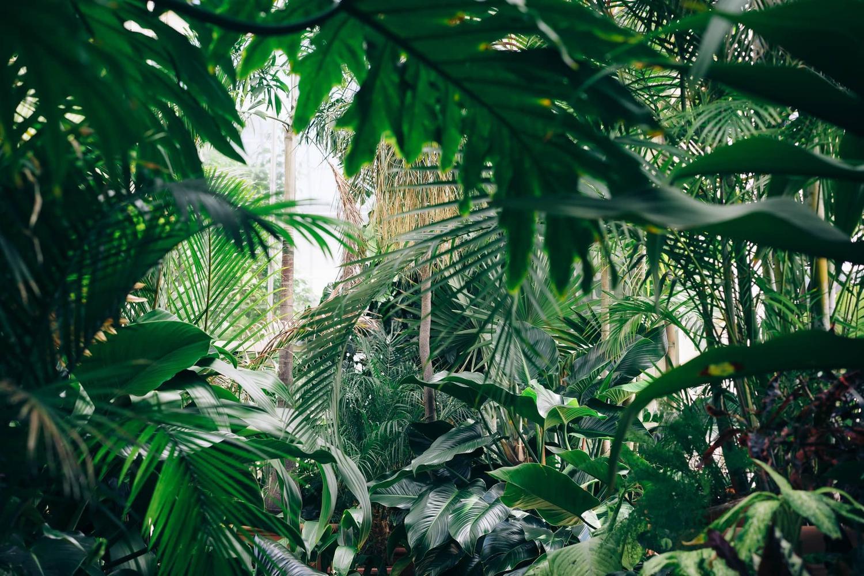 Zelenoprstnost in zemljegrebstvo
