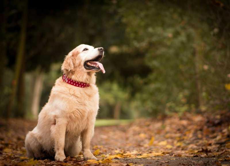 5 Ways CBD Can Improve Your Senior Pet's Life