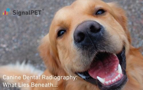 Canine dental radiography webinar