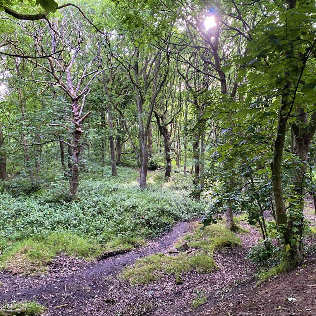 Bramley Fall Woods path and woods