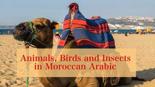 Animals, Birds, and Insects in Moroccan Arabic