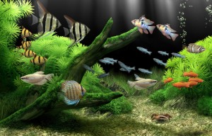 What To Do To Keep Your Fish Robust Much Longer