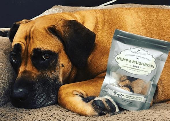 Holistic Hound CBD Dog Treats