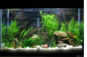 Best Filter for a Freshwater Aquarium