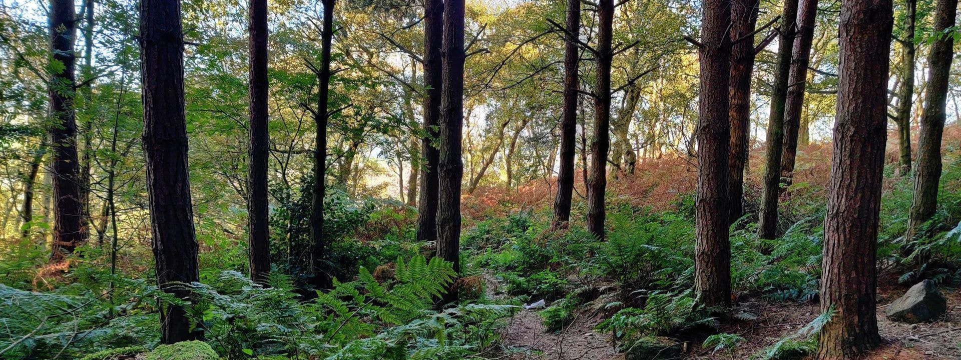 Otley Chevin Forest Park Wood