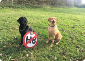 Jet and Ben police dogs