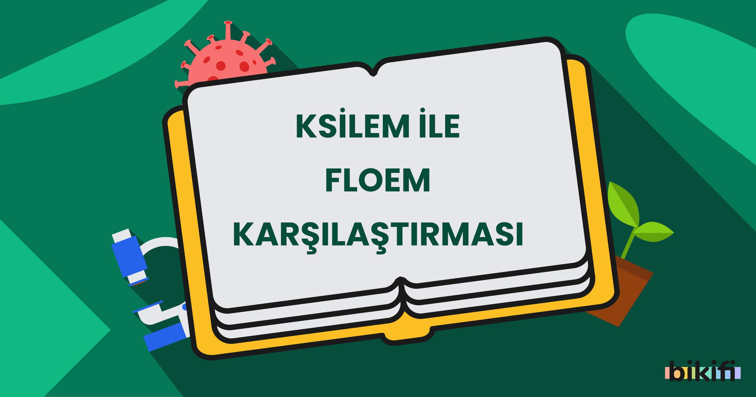 Ksilem ile Floem Karşılaştırması