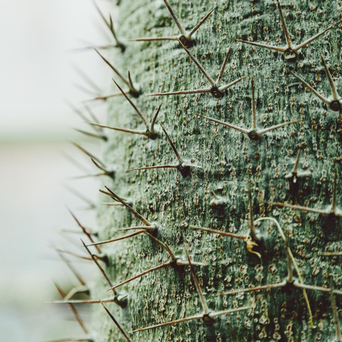 Visual identity inspiration: succulent with spines