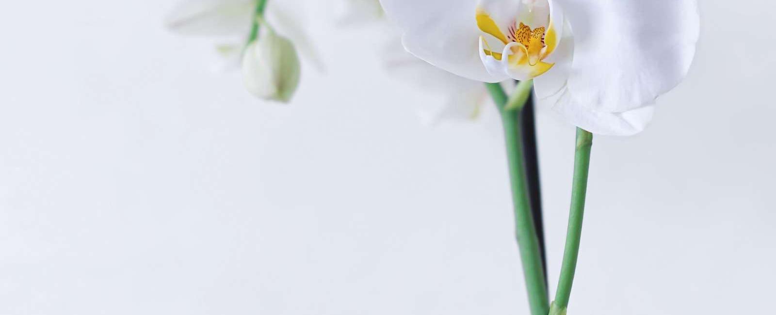 Orhidee şi plante GIGANTE create din sticlă