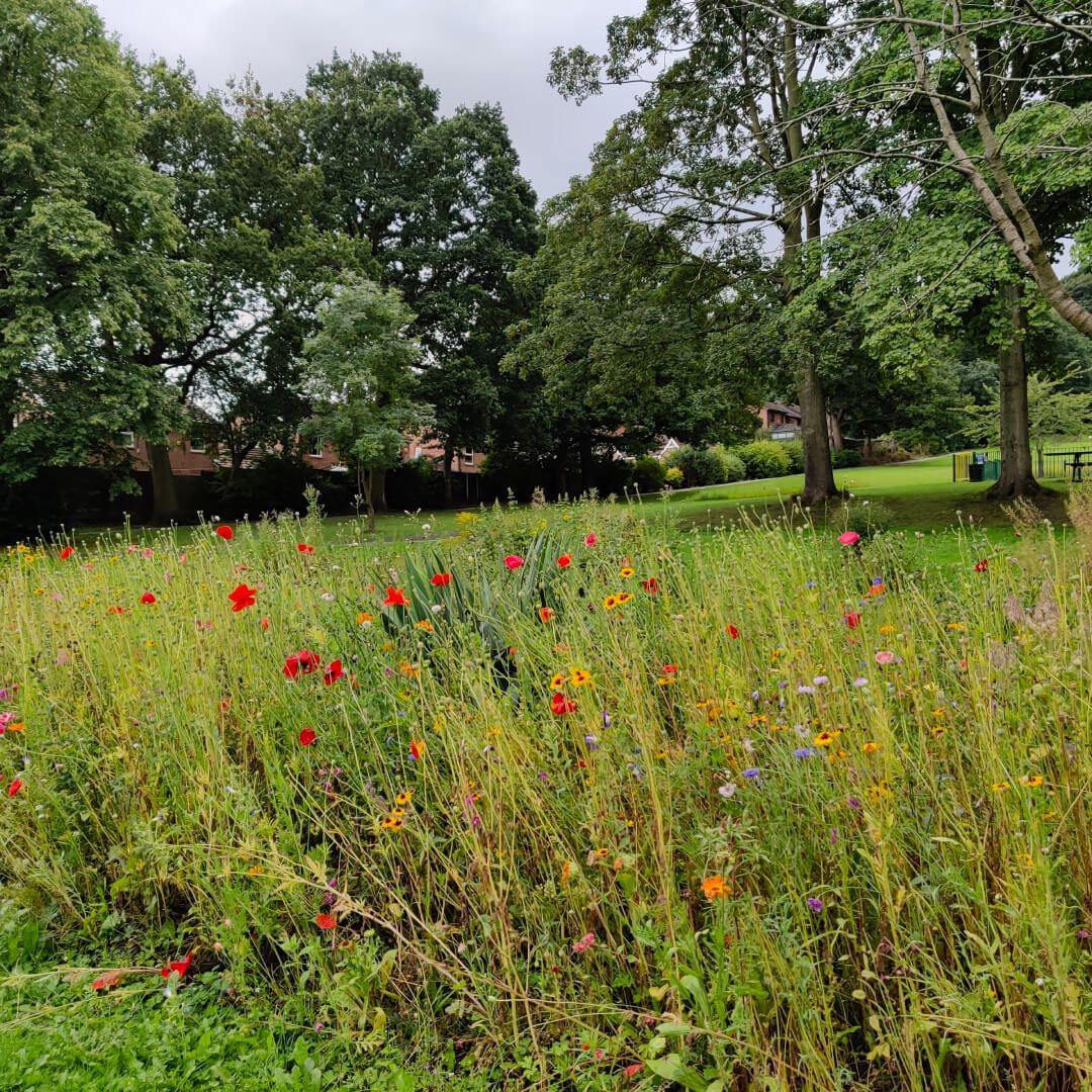 Rodley Park flowers