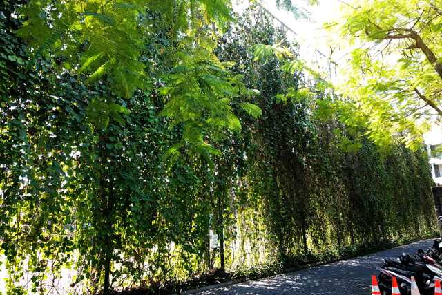 Green Walls - Absorb pollution, offer cooling shade and cost much less than any other walls.