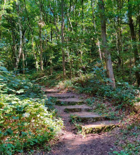 Hawksworth Wood