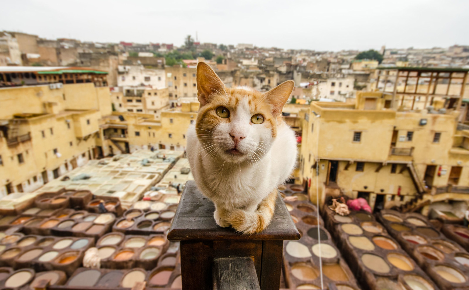 Everything You Need to Know About Morocco Leather and the Tanneries in Fez