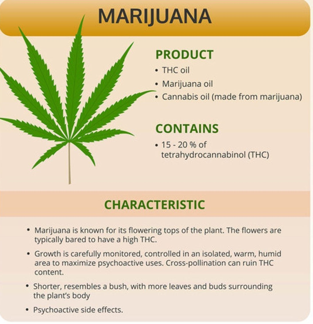 Information on Marijuana