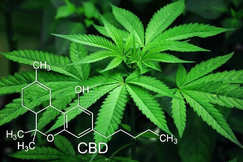 Medicinal Cannabis CBD Chemical Compounds