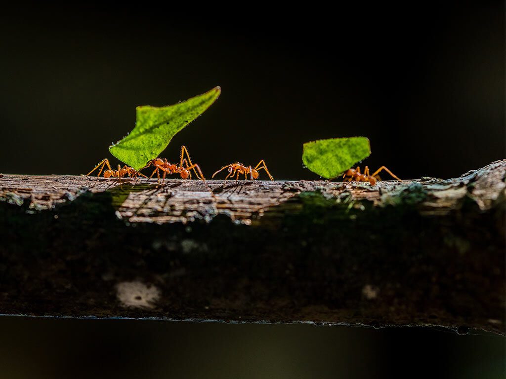 Lightstep Microservices - Ants
