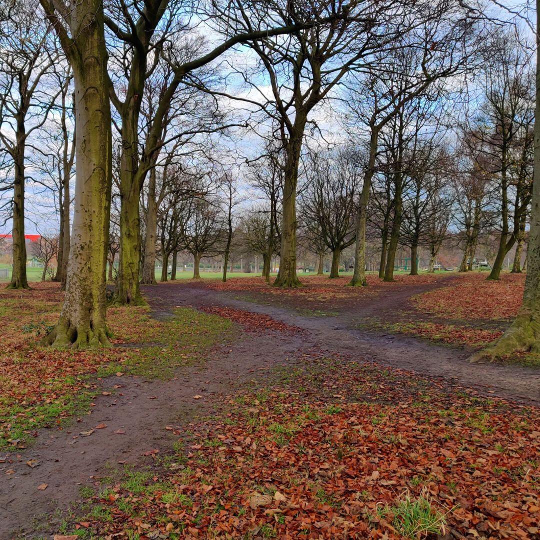 Path crossing in Batcliffe Wood