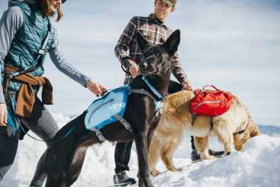 Snowshoeing with Your Dog