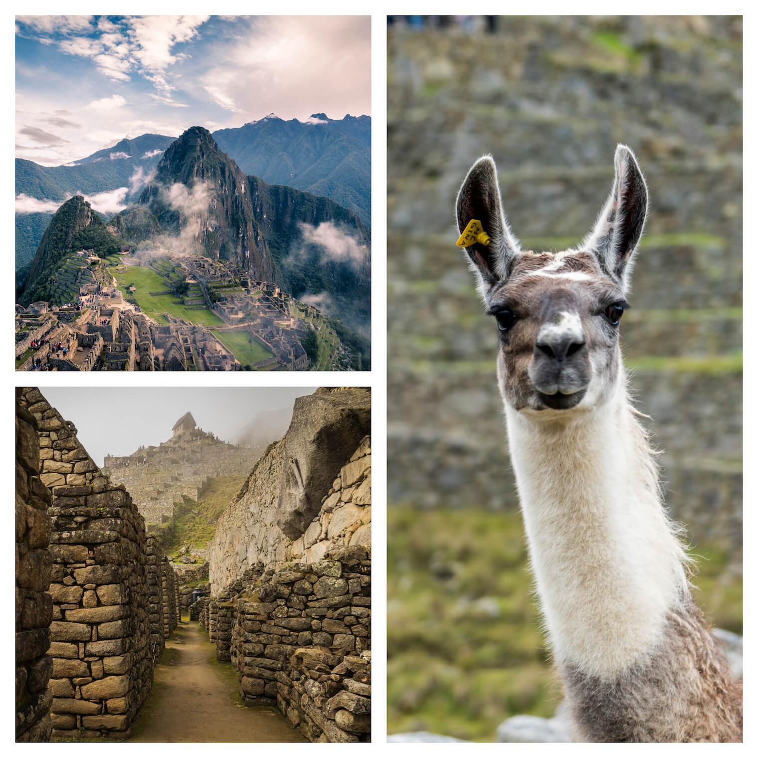 3 fotos: na esquerda superior, a famosa vista da rocha de Machu Picchu com as ruinas logo abaixo. Esquerda inferior: vista das ruinas. Em destaque na direita: uma lhama olhando para a câmera.
