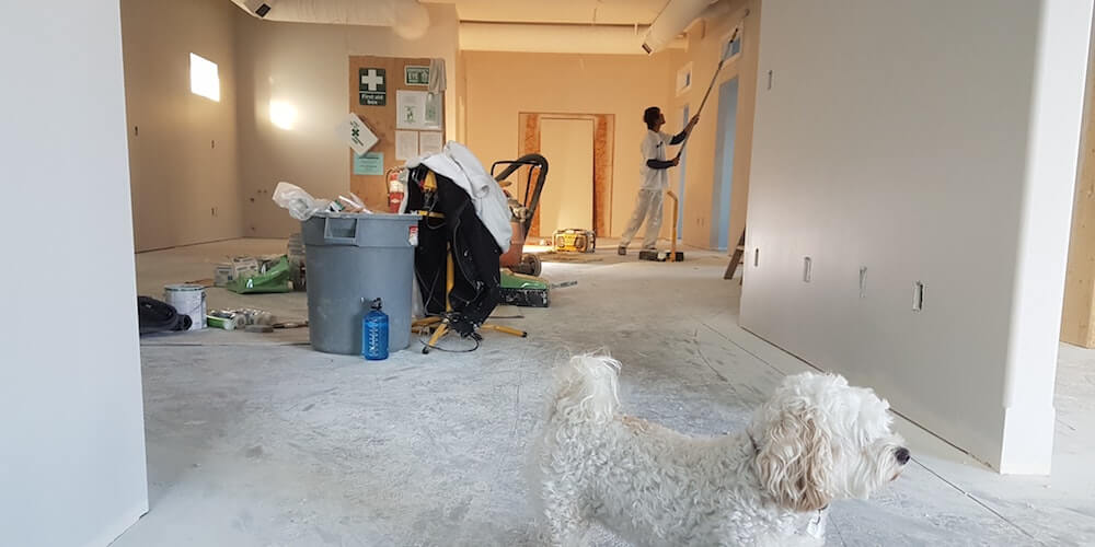 image of man painting wall with dog in foreground