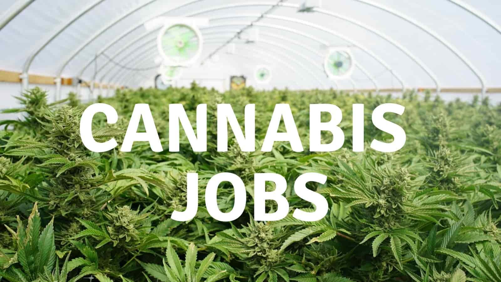 Awesome Legal Cannabis Jobs in Australia