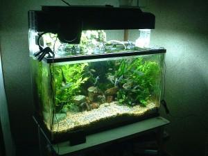 Freshwater Aquarium Filtration Tips