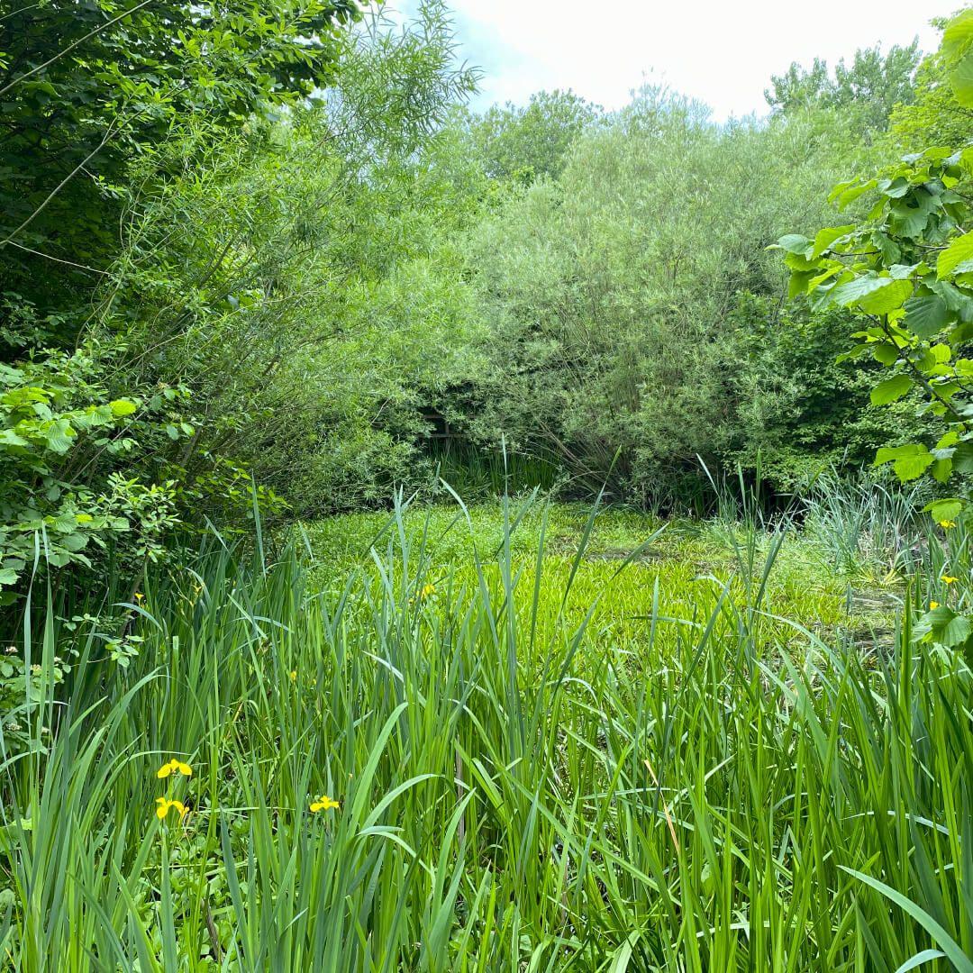 Kirkstall Valley Nature Reserve pond