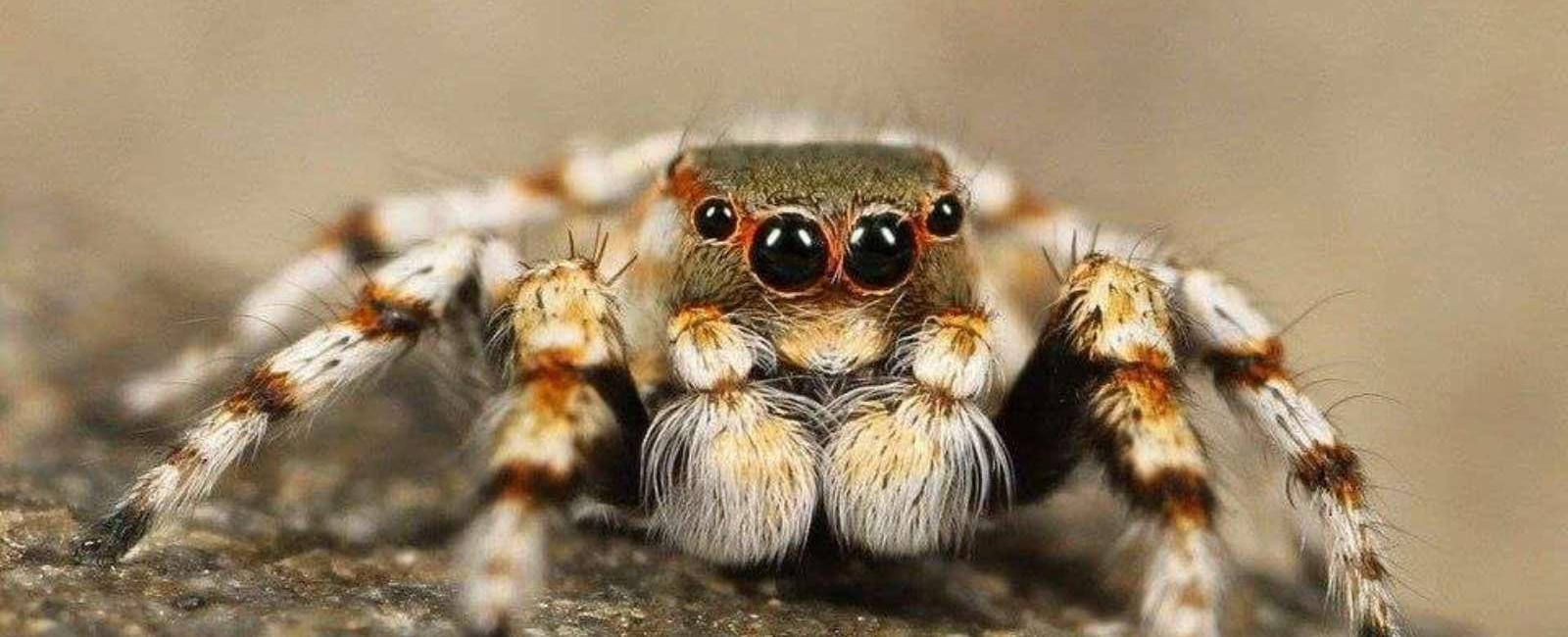 15 Curiozități interesante despre tarantule