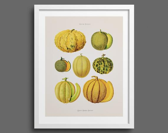 Melons and Squashes