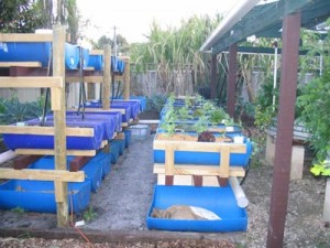 Aquaponics Fish Secrets - What Are the Best Choices for Fish in an Aquaponics System?