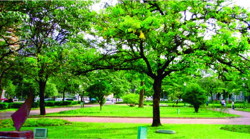Imagem em destaque para o artigo: Árvores nativas de BH são refúgio para aves