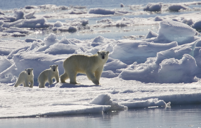Global Warming: Melting kingdom of the Polar Bear