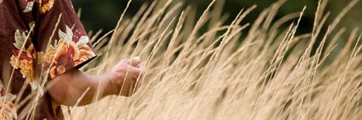 Hands through the grass
