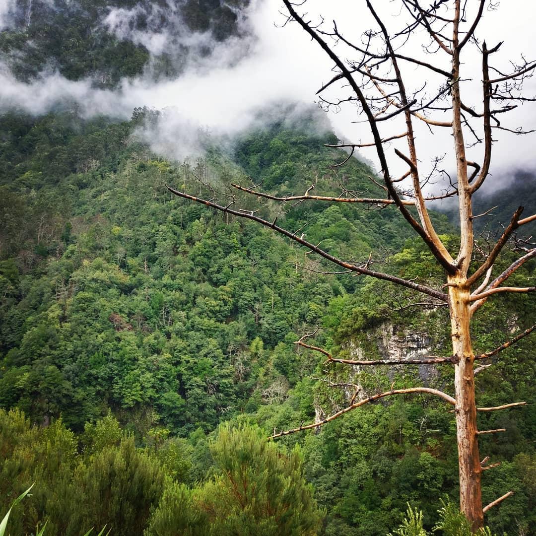 photo of Madeira