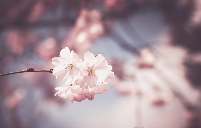 Blossom Garden, from Internet!