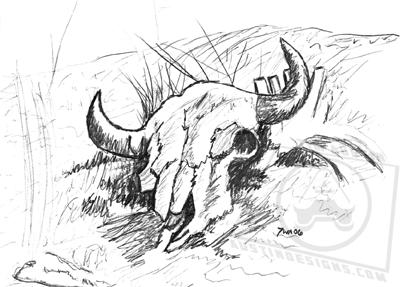 Cow Skull Sketch
