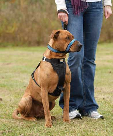 What to Look for In An Obedience Class