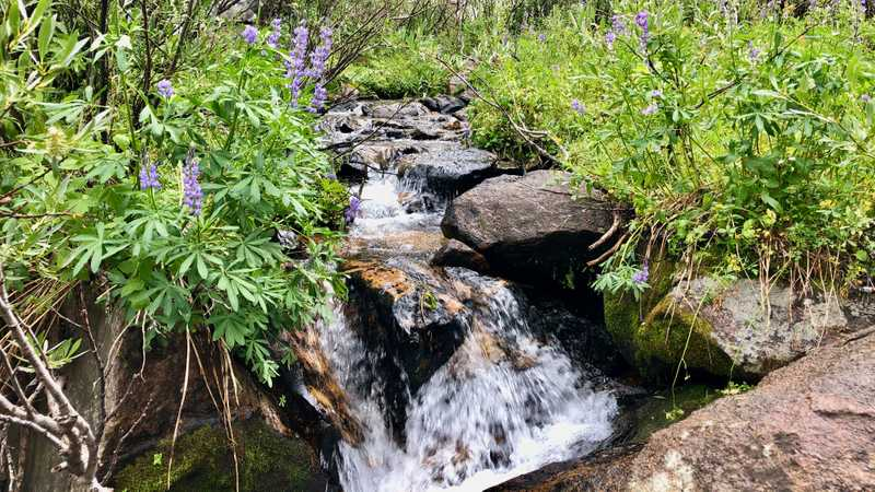 A stream flowing into the East Fork of Carson River