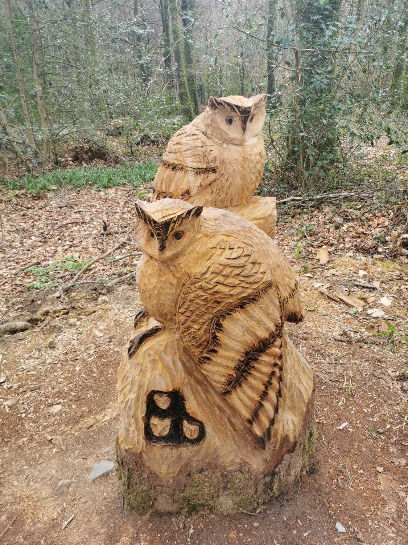 Drumboe Woods