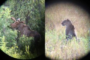 Wildlife captured by binoculars