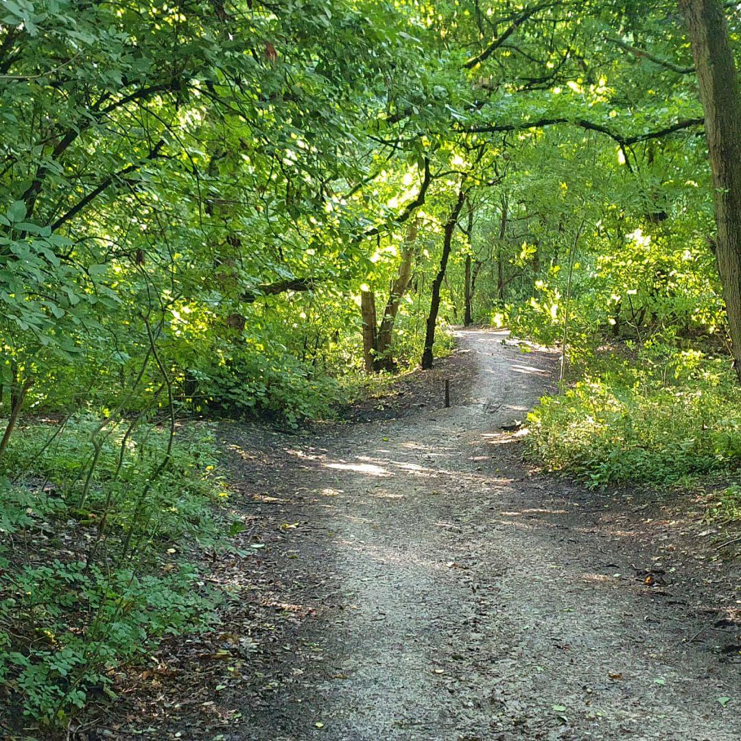 Nan Whins Wood path