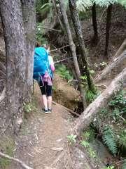 Climb across the overturned tree