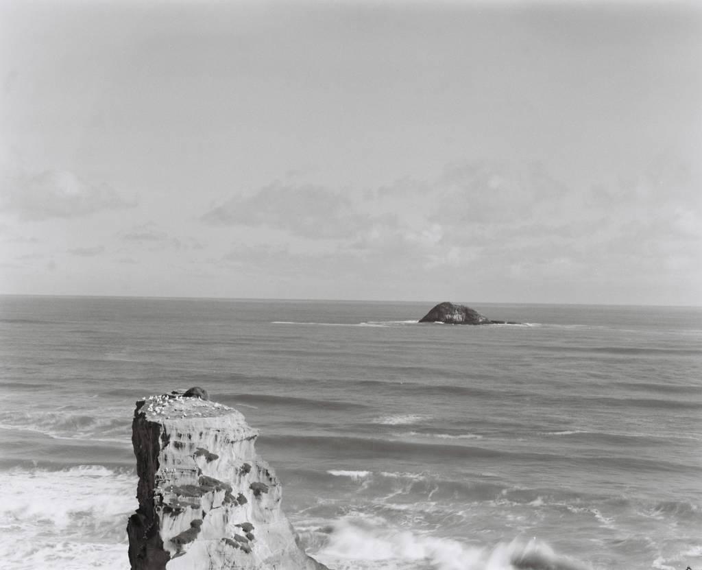 Muriwai Gannet Colony, an outcrop over the ocean with nesting seabirds