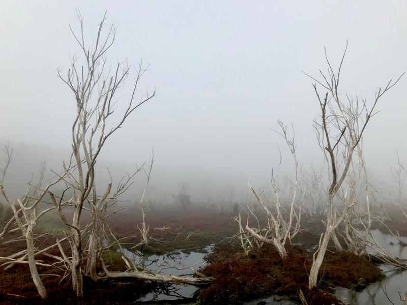 Shrouded marshes remind us of Lord of the Rings